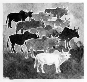 ten cattle, illustration by Ken Tunell